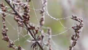 Spider cobweb with dew drops stock footage