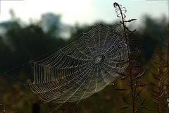 Spider Cobweb Royalty Free Stock Image