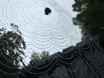 Nature. Spider on a cobweb. The cobweb with drops of rain on it and a spider Royalty Free Stock Photos