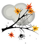 Spider in cobweb in the fall Royalty Free Stock Photography