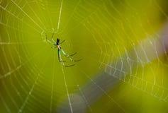 Spider in wild. Spider on cobweb in Indonesia stock image