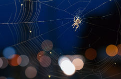 The spider on a cobweb during nighttime Stock Images