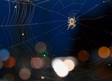 The spider on a cobweb during nighttime Royalty Free Stock Image