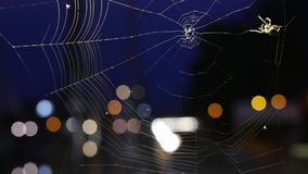 The spider on a cobweb during nighttime stock video