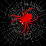 Spider on cobweb. Red spider on cobweb on a black background Stock Images