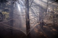 Spider, cobweb, a smoke and a through light rays. Halloween theme royalty free stock images
