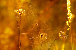 Spider cobweb in the sunlight Royalty Free Stock Photography