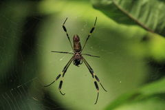 Spider on cobweb Stock Photo
