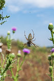 Spider on cobweb. Upside down spider on cobweb against blue sky Stock Images