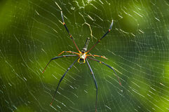 Spider. Stock Photo