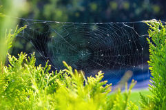 Spider cobwebs on the plant. Concept of autumn season. Spider cobwebs on the plant Stock Images