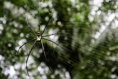 Spider. In a coconut grove Stock Photo