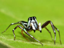 Spider on colorful background Stock Images