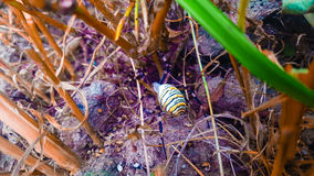 Spider. Colourful grass brown walking Stock Photos