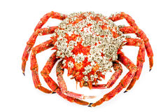 Spider Crab Stock Photo