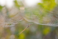 Spider crane. Spider wake up stretch body  in the morning Stock Image
