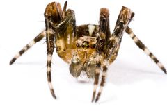 Spider crawling in extreme close up Stock Photo