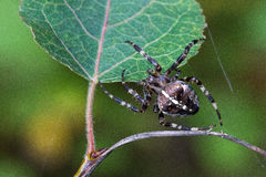 Spider. Crawling on a plant stock photos