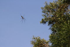Spider crawling in the sky Royalty Free Stock Photography