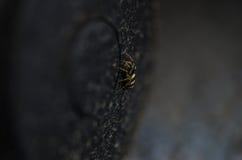 Spider crawling upwards Royalty Free Stock Images