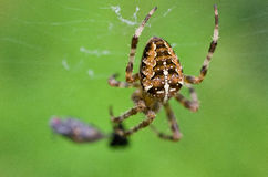 Spider with cross Royalty Free Stock Photo
