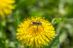 Spider and dandelions Stock Image