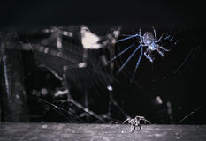 Spider in dark place Royalty Free Stock Photos