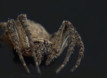 Spider in darkness Royalty Free Stock Image