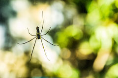 Spider with Defocus Background Stock Photography