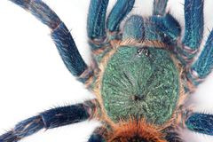 Spider detail Royalty Free Stock Images