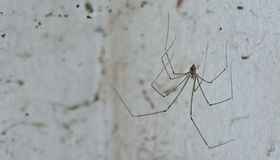 Spider and dirty cobweb  on the wall ; they are the cause of dir Royalty Free Stock Photography