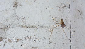 Spider and dirty cobweb  on the wall ; they are the cause of dir Royalty Free Stock Photos