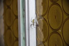 Spider on door. Spider preparing bug for meal Royalty Free Stock Image