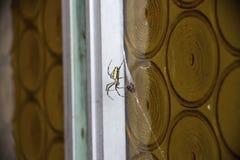 Spider on door Royalty Free Stock Image