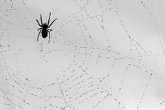 Spider and the drop Royalty Free Stock Photography