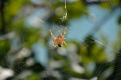 Spider eating the victim Royalty Free Stock Images