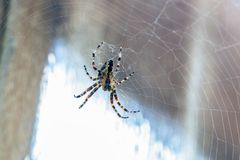 Spider at the edge of the door stock image