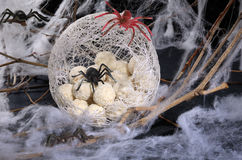 Spider eggs in a cocoon Stock Image