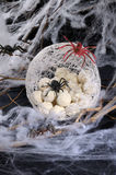 Spider eggs in a cocoon Royalty Free Stock Photography