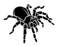 Spider. Eps 10  illustration Design Royalty Free Stock Images