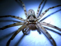 Spider face. Face of a big spider look awesome Stock Photo