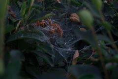 Spider family lair in city park royalty free stock photos