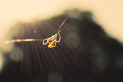 Spider on a fibre Royalty Free Stock Photography