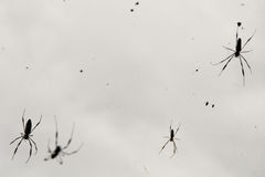 Spider field Royalty Free Stock Photography