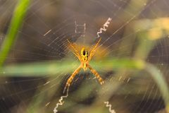 1spider stock photography