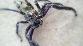 Spider on the floor. Spider black on the floor royalty free stock photography