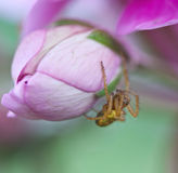 Spider on a flower Stock Photography