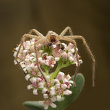 Spider on the flower Royalty Free Stock Images