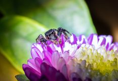Spider on the flower stock images