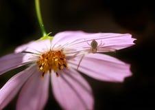 Spider on flower Stock Image